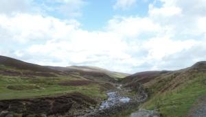 Brownsey Moor