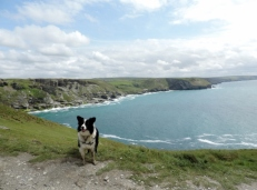 Mollie on Coastal Path from Tintagel to Trebarwith Strand
