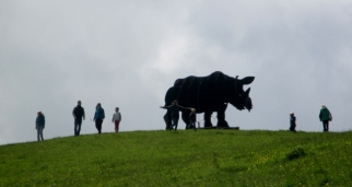 Rhino on the Hill, Port Isaac, Cornwall