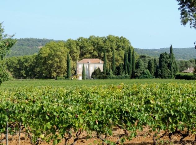 Local Vineyard, Gassin