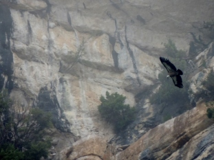 Birds of Prey, Gorges du Verdon