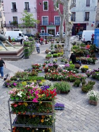 Flower Market Sète