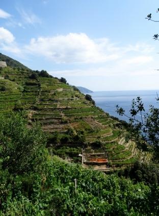 Steep Terraced Cliffs