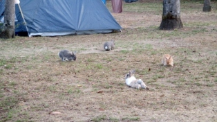 Rabbits at Camping Italia